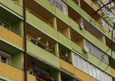 W taki sposób mieszkańcy osiedli walczą z gołębiami - autorski sposób na odstraszanie gołębi