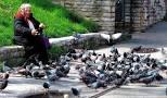 siatki-zabezpieczajce-golebie-spde-walbrzych