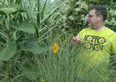 Trawy na mojej działce (2)