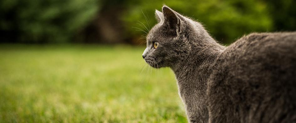 siatki dla kotow